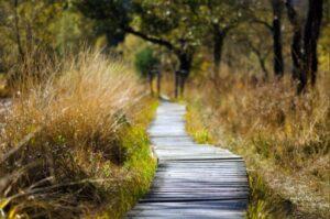 Din vej gennem skilsmissen